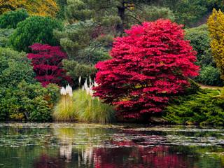 Printed kitchen splashbacks Khaki Acer Tree Leaves Changing Colour in Autumn