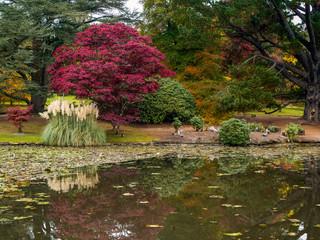 Printed kitchen splashbacks Khaki Tree Leaves Changing Colour in Autumn