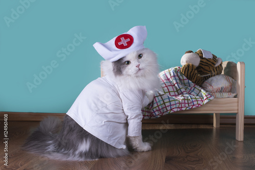 how to neuter a female cat