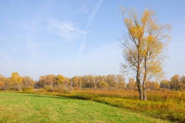Autumn abandoned golf course