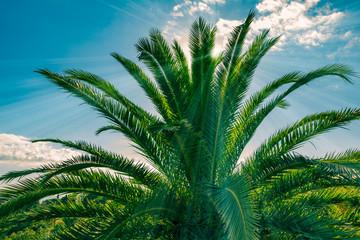 Sonnenstrahlen scheinen durch die Blätter einer Palme