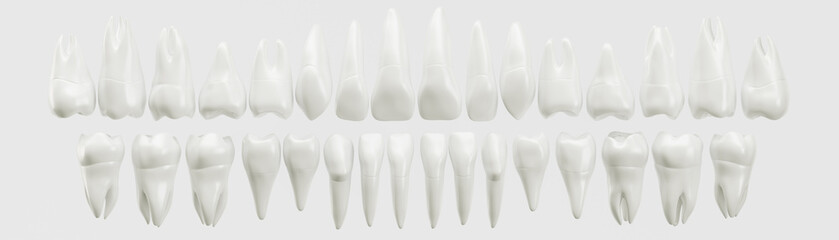 Healthy 32 human teeth - 3d rendering