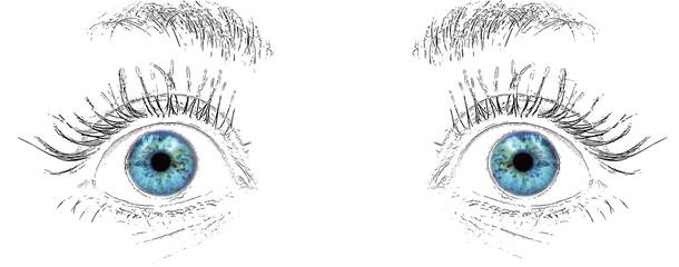 visual system: blue eyes