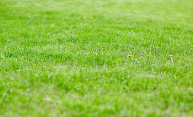 close up of lawn or meadow with mown grass