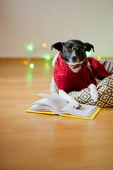 Black-white dog bespectacled and in a reindeer suit put paws on the open book.