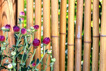 Japanese chrysanthemum and bamboo background