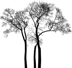 silhouettes of the trees without leaves