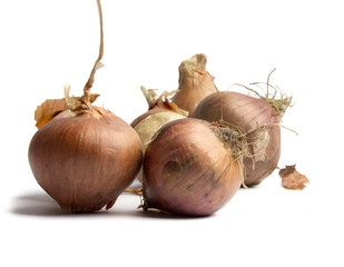 Onions on a white background.