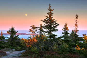 Cadillac Mountain at Acadia National Park in Maine Wall mural