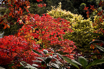 Red leaves in woodland, autumnal texture