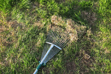 Dethatching lawn with a lawn rake in the spring garden