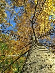 albero nel bosco in autunno