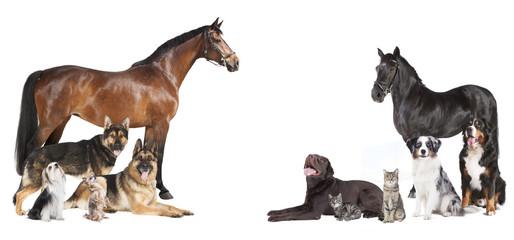 Pferde und Hunde Collage