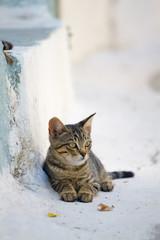 Greek cat on a street in Nissiros