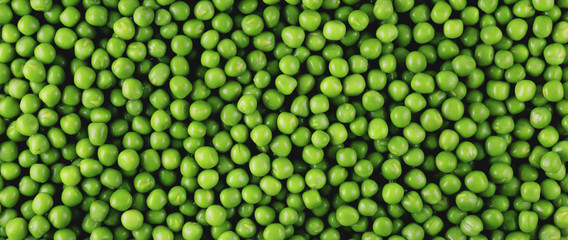 Green peas panorama