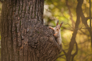 little curious squirell on a tree