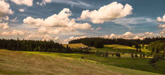 Summer in Black Forest