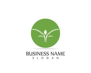 Rice Plant Logo