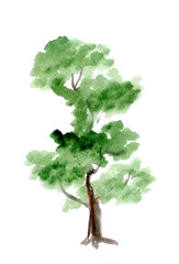 tree on a white background for the text. watercolor