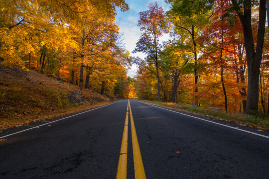 Autumn in bear mountain New York. View of an empty road between the fall golden foliage