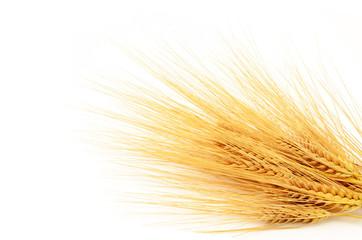 Getreide Gerste