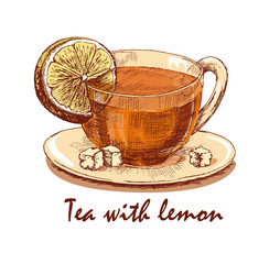 Colored hand drawn cup of tea with lemon. Cup with tea, lemon slice and loaf-sugar on saucer. Hand drawn graphic illustration isolated on white background. Vector