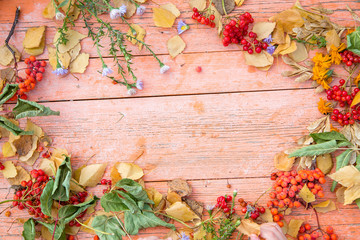 autumn frame of plants on a wooden table