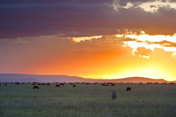 Sunset in Serengeti