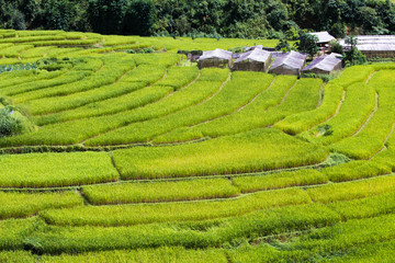 Terraced Paddy Field in High Mountains at Mea La Noi City , Mae Hong Son , Thailand
