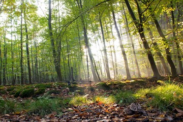 Autum in the Wood, Ruhr Area