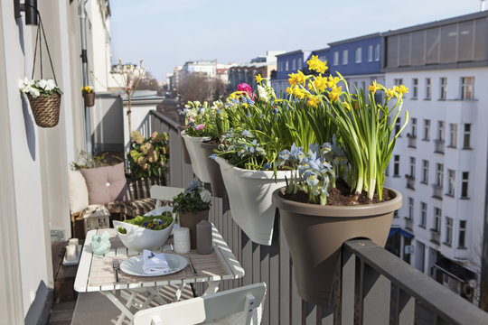 potted spring flowers on a sunny balcony in the city