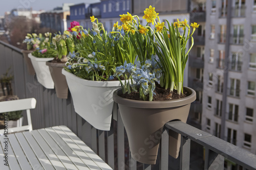 Potted spring flowers on a balcony fence in the city stock photo potted spring flowers on a balcony fence in the city mightylinksfo
