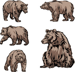 bear, image, various poses, drawing, color