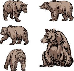 bear, image, various poses, drawing, color