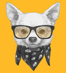 Portrait of Chihuahua with glasses and scarf. Hand drawn illustration.
