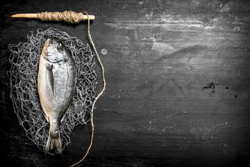 Fototapete - Fresh sea fish on a fishing net.