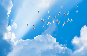 Foto En Lienzo - flock of pigeons flying in blue sky among clouds to meet sun bea