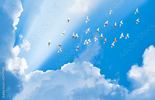 Fototapete flock of pigeons flying in blue sky among clouds to meet sun bea