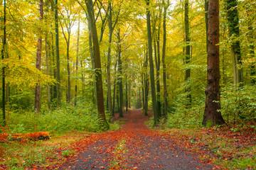 Natur Herbst Waldlandschaft im Siebengebirge
