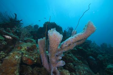 Underwater tropical fish schooling in coral reef