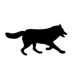 adult wolf vector illustration black silhouette