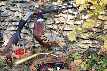 Coloroful pheasant, hunting gun, hunting bag with cartridges in front of stone wall outdoors