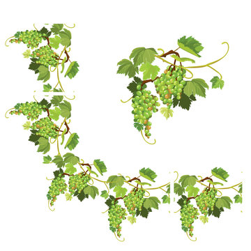 Set of Grapes frame, vignette and repeated element  for wine lab
