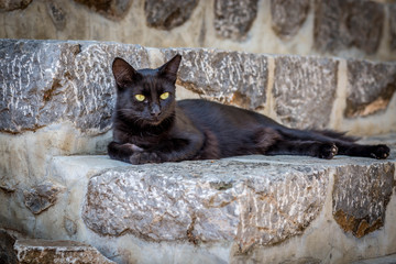 Black Cat Laying on Stone Steps