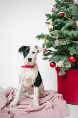 Cute puppy dog near decorated Christmas tree in studio