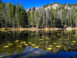 Evergreen and Lake Reflection Landscape ~ Rocky Mountain National Park