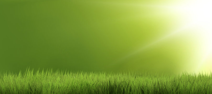 background green grass nature grass 3d render