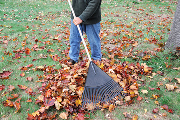 man working in the yard to clean fallen leaves by fan rake