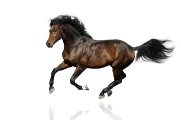 Podpalanego konia bieg cwał odizolowywający na białym tle