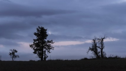 Dry trees on horizont